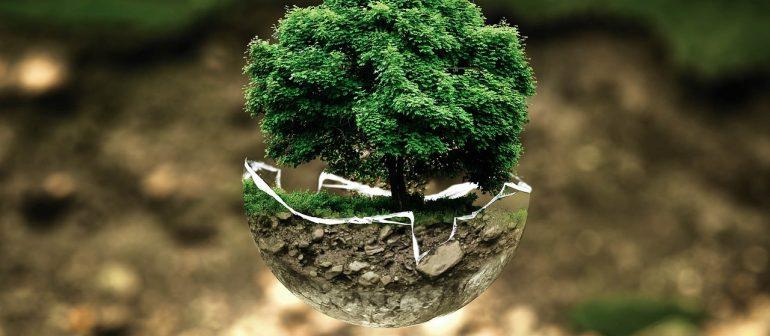 Baum- und Waldinvestments